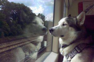 посадка с животными