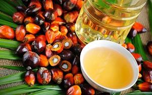 пальмовое масло - вред или польза?
